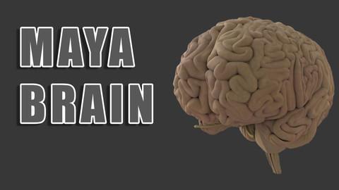 Maya Brain
