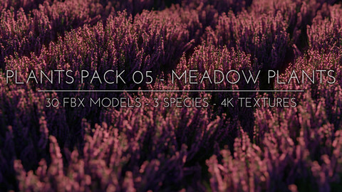 3D Plants Pack 05 - Meadow Plants