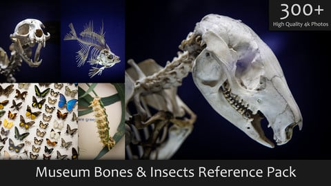 Museum Bones & Insects Reference Pack