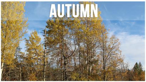 Autumn Photopack