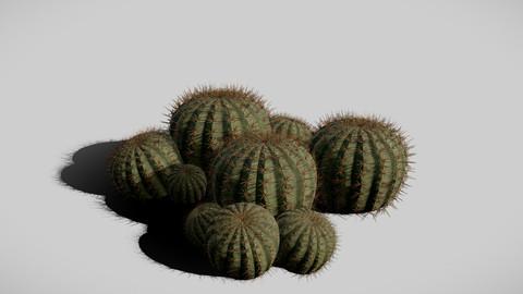 Biznaga (Cactus)