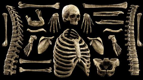 Male Skeleton Props Megapack