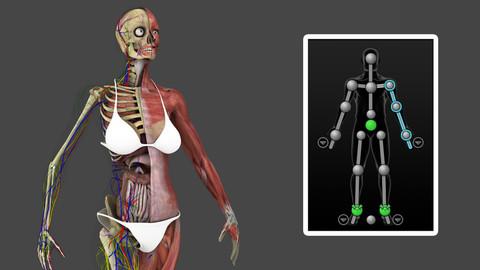 Motion Capture Female Anatomy
