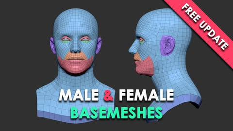 Head Basemesh for Production V2