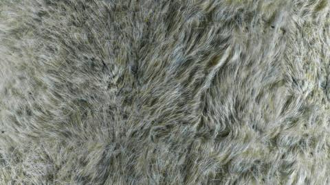 PBR Reindeer Fur 2