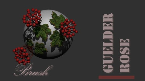Guelder rose full