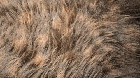 Fur (Ornatrix+Redshift) 3dsmax+Maya scenes