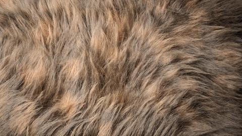 Fur (Ornatrix+Redshift) 3dsmax scene