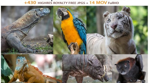 25 Animal species / WILDLIFE PACK
