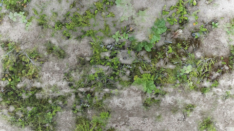 PBR Overgrown Concrete 13