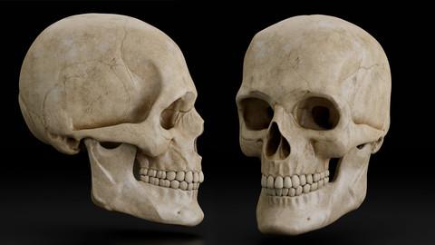 Skull | 3D model
