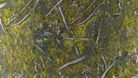 PBR Ground 13 - 8K Seamless Texture (5 variations)