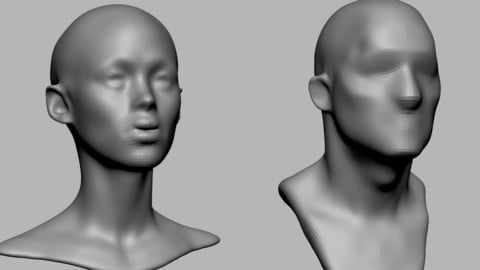 Male Female Head Basemesh