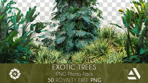 PNG Photo Pack: Exotic Trees