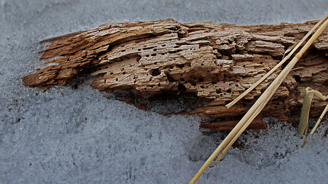 Decaying Driftwood in the Snow