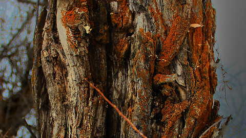 Orange Lichens on a Tree Stump