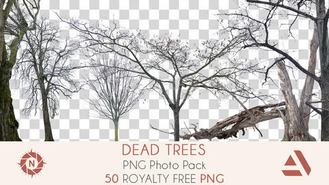 PNG Photo Pack: Dead Trees