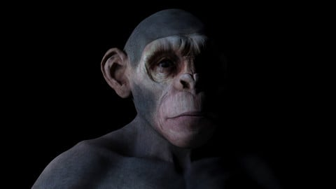 Ape High Detailed (High/Low Poly)
