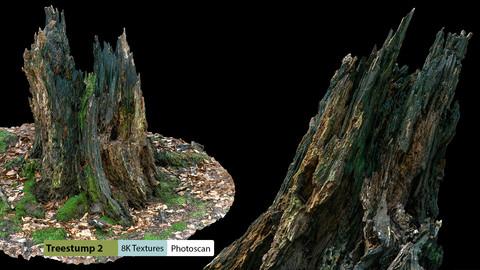 Treestump2 Photo Scan