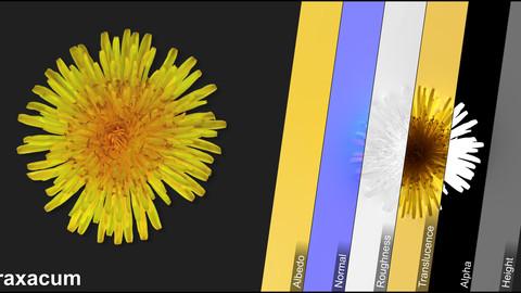Photometric Scan Vegetation - Taraxacum - Flower 1