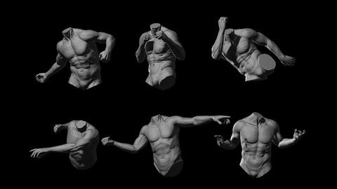 Male Torso 6 Poses