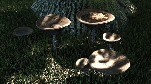 Set mushrooms (6 types)