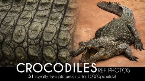Crocodile High Res Photos for reference, bashing and texturing (up to 10000px wide full crocs!)