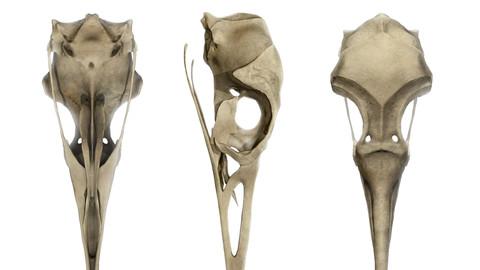 Gull Skull