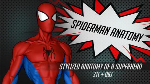 SPIDERMAN ANATOMY