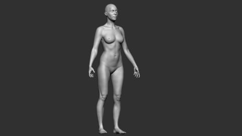 Female Body Base Mesh