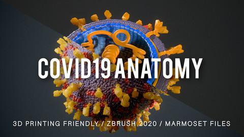COVID19 Anatomy
