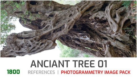 Ancient Cracked Tree #1 Photogrammetry image pack