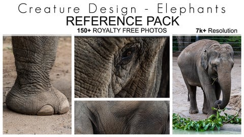 Creature Design Reference Pack - Elephant Textures - 150+ Royalty Free Photos