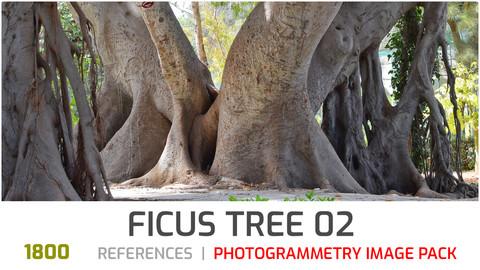 Ficus Tree #2 Photogrammetry image pack
