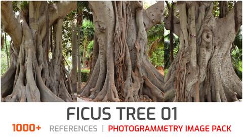 Ficus Tree #1 Photogrammetry image pack