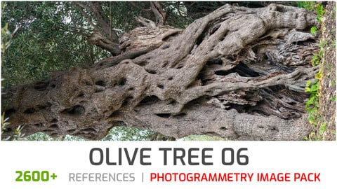 Olive Tree #6  Photogrammetry image pack