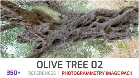 Olive Tree #2 Photogrammetry image pack