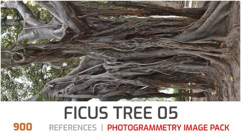 Ficus tree #5  Photogrammetry image pack