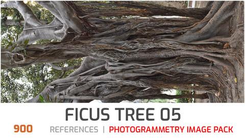 Ficus tree #5  Photogrammetry image pack