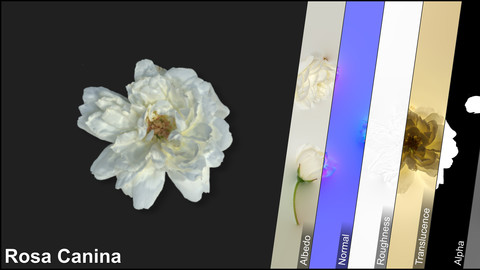 Photometric Scan Vegetation - Rosa Canina - Flower White Kit 1
