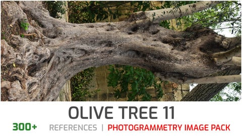 Olive Tree #11 Photogrammetry image pack