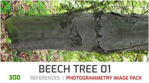 Beech Tree #1 Photogrammetry image pack