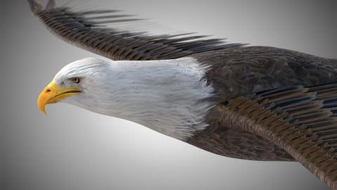 Bald Eagle Bird Rigged Low Poly PBR textures