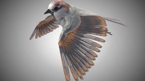 Sparrow Bird Rigged PBR