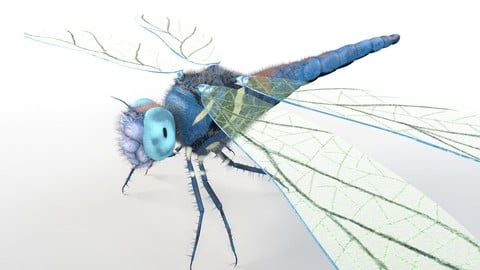 Dragonfly Insect Rigged PBR