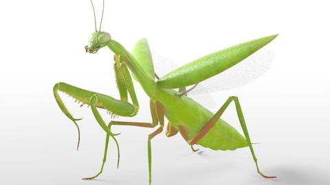 Praying Mantis Insect Rigged PBR