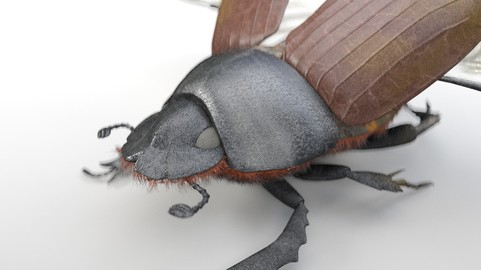 Dung Beetle Rigged PBR