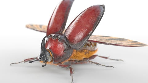 Rhinoceros Beetle Insect Rigged PBR