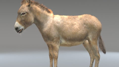 Donkey Hair Fur Rigged