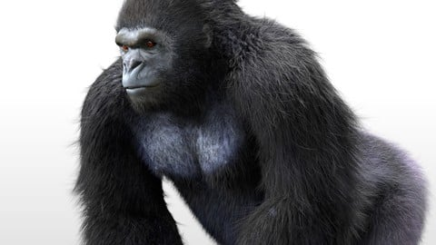 Gorilla Hair Fur Rigged